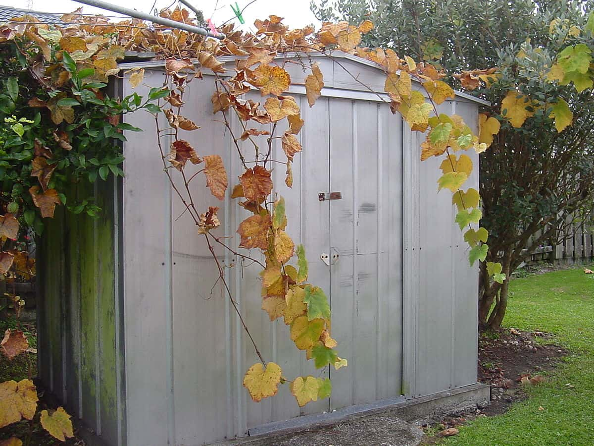 traditional_metal_shed_door