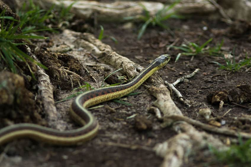 how to keep snakes away - crawling in yard