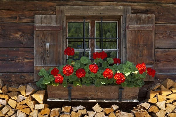Add color to your shed windows with flower boxes