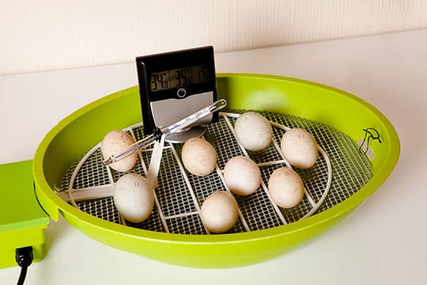 Small Chicken Egg Incubator Used at Home