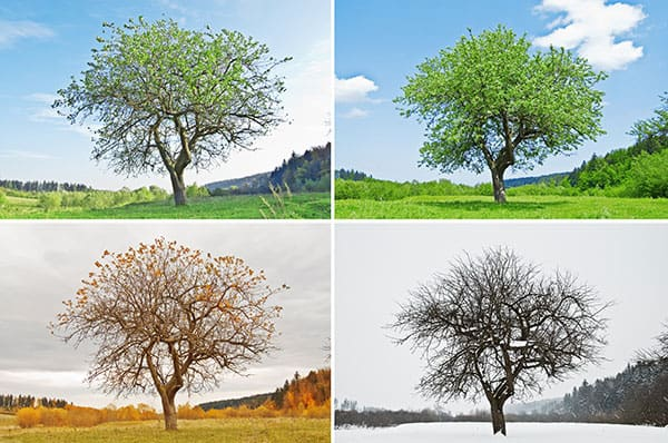 seasons-image