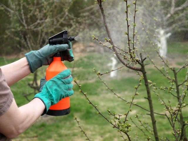 Hand sprayer being used on trees