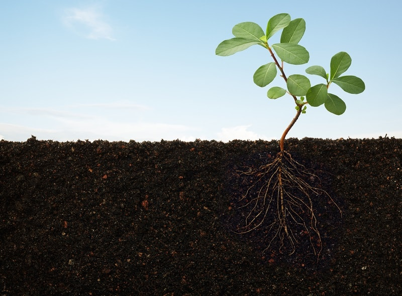 How to Prepare Soil for Planting - Cross section of plant roots