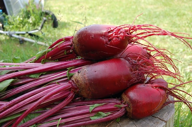 What to Plant in June - Beetroot