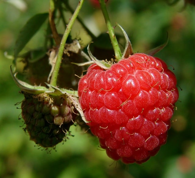 What to Plant in June - Raspberries