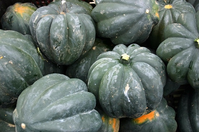 What to Plant in June - Squash