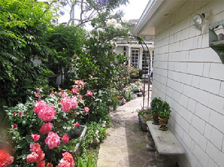 Roses landscaping