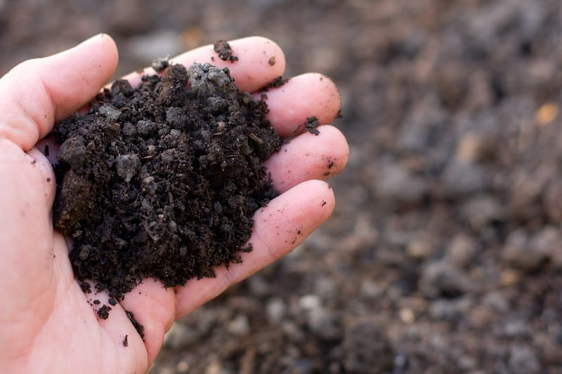 A handful of organic fertilizer mixed into soil