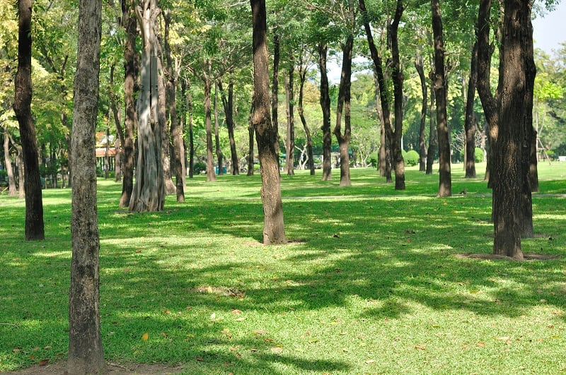 A large yard space with many trees