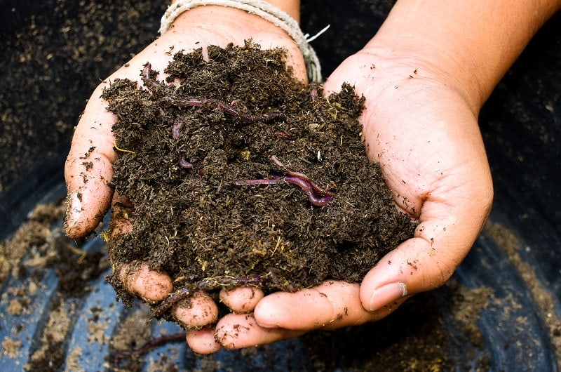 How to prepare soil - living organisims in soil