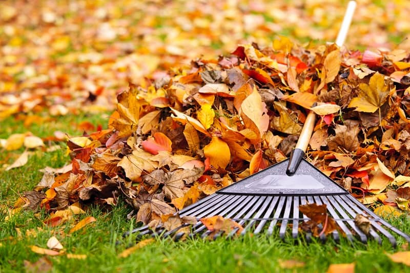 Best Garden Mulcher - Pile of fall leaves with fan rake on lawn