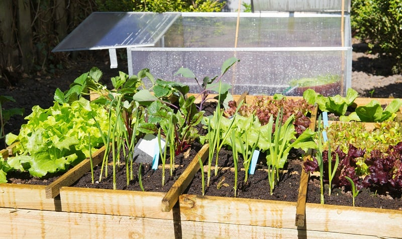 Square foot gardening when plant spacing