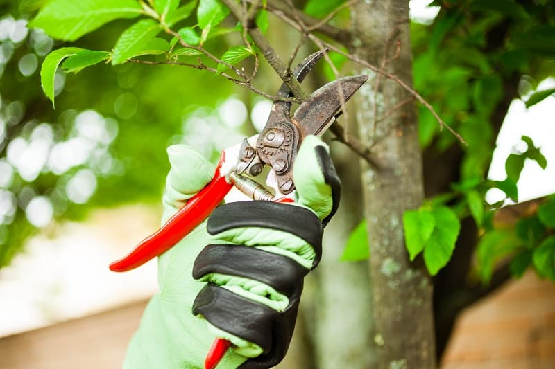 Best Secateurs - stand out color handles