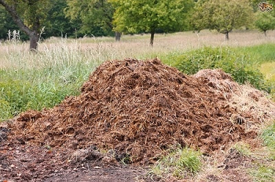 Horse_manure_fertilizer