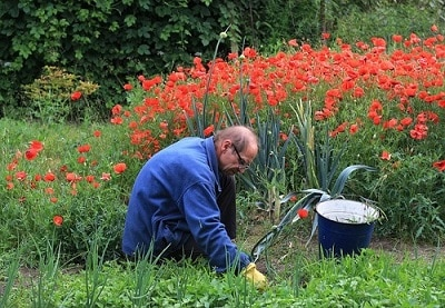 getting rid of unwanted growth, the old fashioned way, with a weeder and bucket