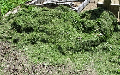 weed-and_other_prune_clippings_fertilizer
