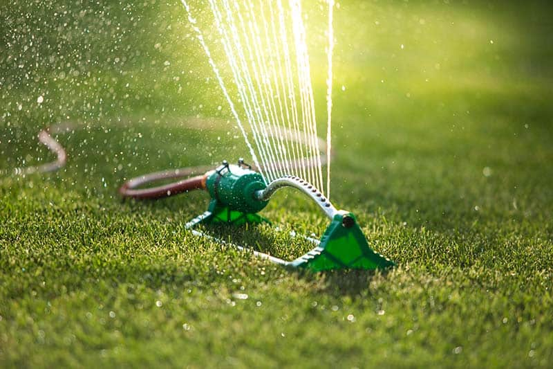 Oscillating Sprinkler in action on lawn