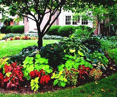 Landscaping Ideas Around Trees We Could Find Enjoy Clean Up The Shady Areas Your Tree