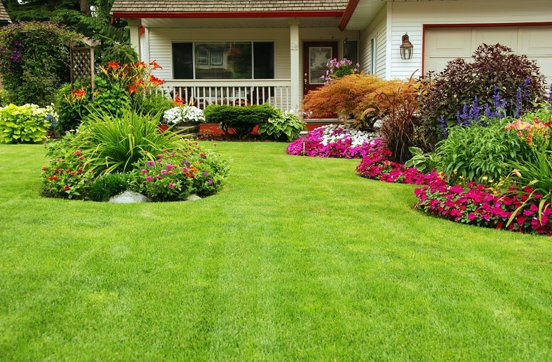 A beautifully manicured lawn with no weeds in it