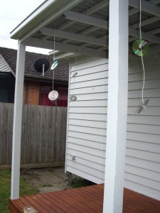 Cd S Tied On A String Zacs Garden