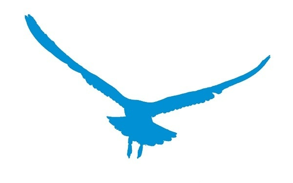 logo-blue.bird-scarer