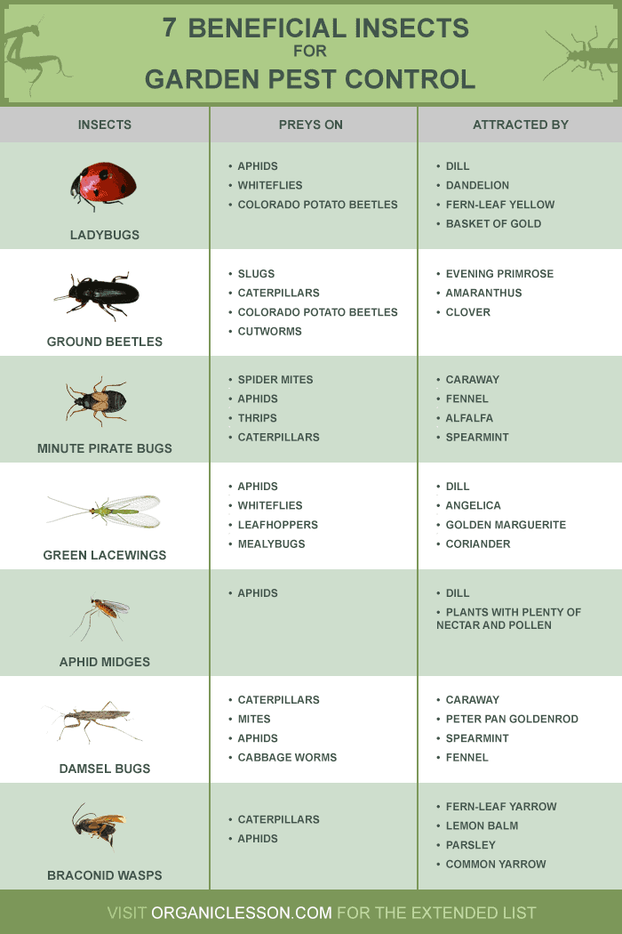 Beneficial insects pest infographic