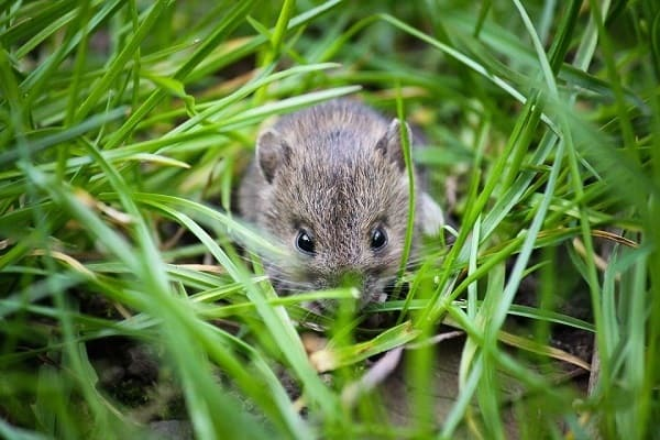 mouse-1335602_960_720